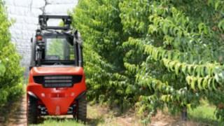 Chariot élévateur au milieu d'arbres fruitiers
